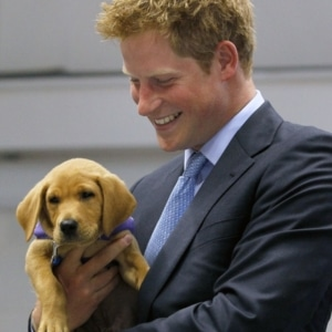 Prince Harry gay